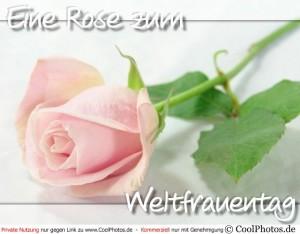 0229_06731_rose_weltfrauentag